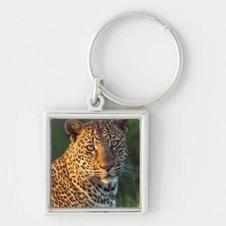 Male Leopard (Panthera Pardus) Full-Grown Cub Key Ring