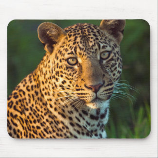 Male Leopard (Panthera Pardus) Full-Grown Cub Mouse Mat