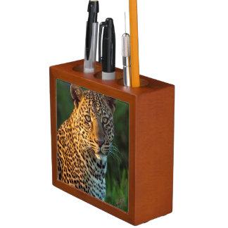 Male Leopard (Panthera Pardus) Full-Grown Cub Pencil/Pen Holder