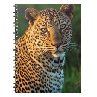 Male Leopard (Panthera Pardus) Full-Grown Cub Spiral Notebook