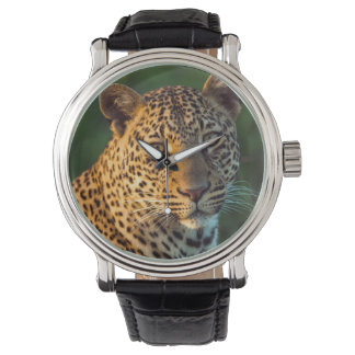Male Leopard (Panthera Pardus) Full-Grown Cub Wristwatches