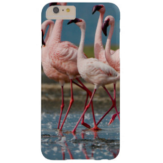 Male Lesser Flamingos (Phoenicopterus Minor) Barely There iPhone 6 Plus Case