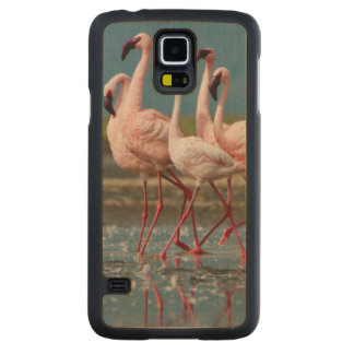 Male Lesser Flamingos (Phoenicopterus Minor) Carved Maple Galaxy S5 Case