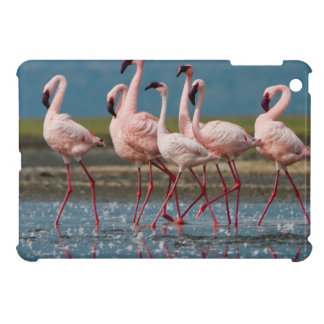 Male Lesser Flamingos (Phoenicopterus Minor) Case For The iPad Mini