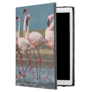 "Male Lesser Flamingos (Phoenicopterus Minor) iPad Pro 12.9"" Case"