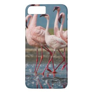 Male Lesser Flamingos (Phoenicopterus Minor) iPhone 8 Plus/7 Plus Case
