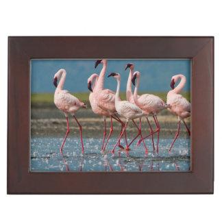 Male Lesser Flamingos (Phoenicopterus Minor) Keepsake Box