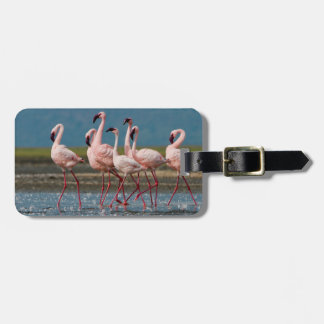 Male Lesser Flamingos (Phoenicopterus Minor) Luggage Tag