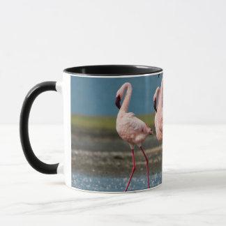 Male Lesser Flamingos (Phoenicopterus Minor) Mug