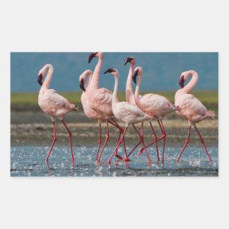 Male Lesser Flamingos (Phoenicopterus Minor) Rectangular Sticker