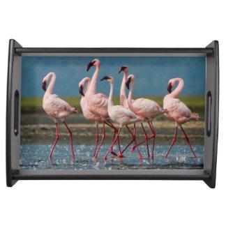 Male Lesser Flamingos (Phoenicopterus Minor) Serving Tray