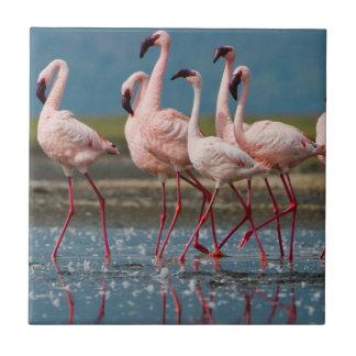 Male Lesser Flamingos (Phoenicopterus Minor) Tile