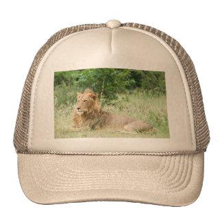 Male Lion Cap