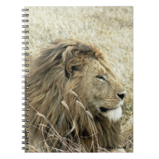 Male Lion Journal