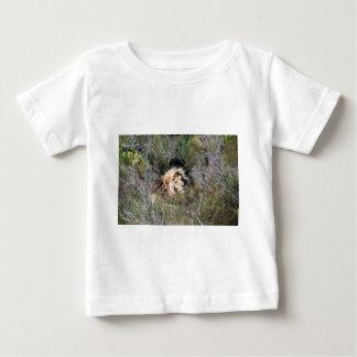 Male lion lying in long grass shirts