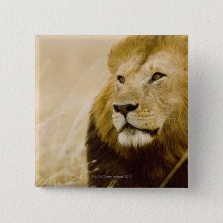 Male lion (Panthera leo) portrait, Masai Mara 15 Cm Square Badge