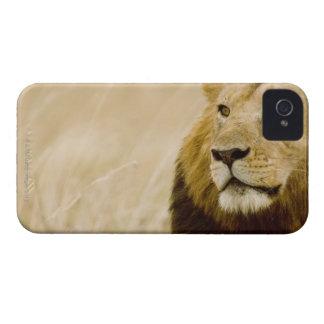 Male lion (Panthera leo) portrait, Masai Mara iPhone 4 Case-Mate Case