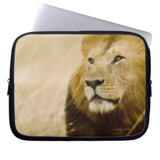 Male lion (Panthera leo) portrait, Masai Mara, Laptop Sleeve