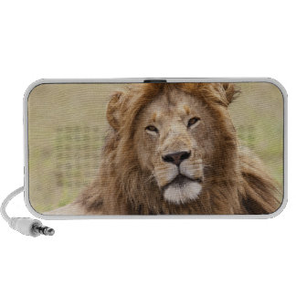Male Lion Panthera leo) resting, Masai Mara Laptop Speakers