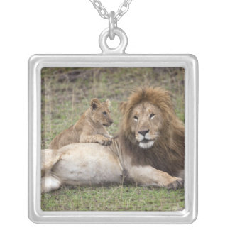 Male Lion Panthera leo) resting with cub, Silver Plated Necklace