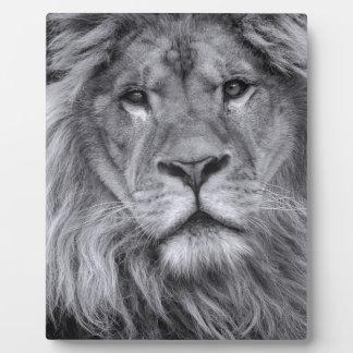 Male lion portrait plaque