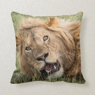 Male Lion Resting Cushion