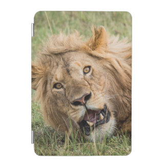 Male Lion Resting iPad Mini Cover