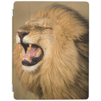 Male Lion Roaring iPad Cover