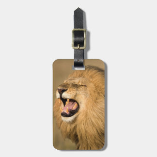 Male Lion Roaring Luggage Tag