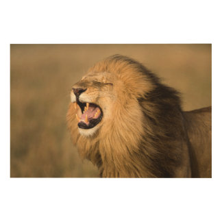 Male Lion Roaring Wood Wall Decor