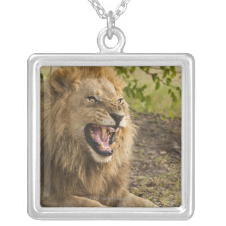 Male lion snarling (Panthera leo), Okavango Silver Plated Necklace