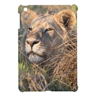 Male lion stalking in grass, head peeking out iPad mini cover