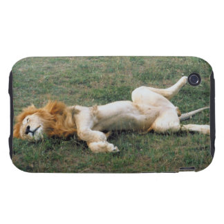 Male Lion Stretching Tough iPhone 3 Covers