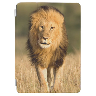 Male Lion Walking iPad Air Cover