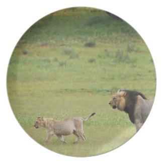 male lion with cub, Panthera leo, Kgalagadi Plate