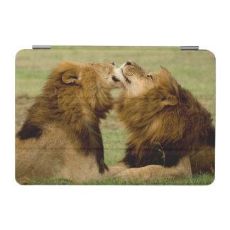 Male Lions (Panthera Leo) Grooming, Maasai Mara iPad Mini Cover