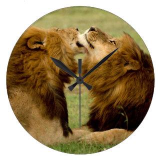 Male Lions (Panthera Leo) Grooming, Maasai Mara Large Clock