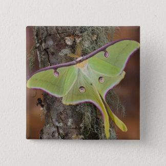 Male Luna Silk Moth of North American 15 Cm Square Badge