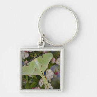 Male Luna Silk Moth of North American 2 Silver-Colored Square Key Ring