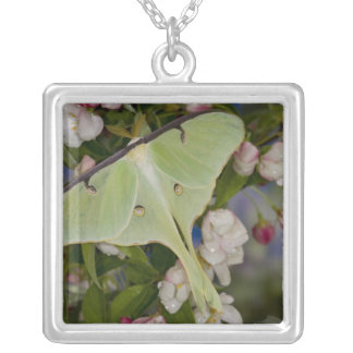 Male Luna Silk Moth of North American 2 Silver Plated Necklace