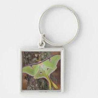 Male Luna Silk Moth of North American Silver-Colored Square Key Ring