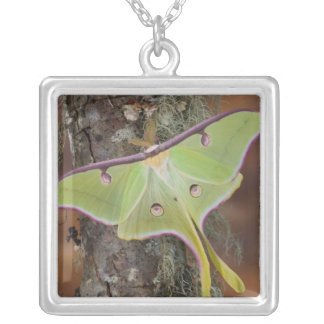 Male Luna Silk Moth of North American Silver Plated Necklace