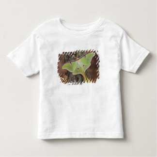 Male Luna Silk Moth of North American Toddler T-Shirt