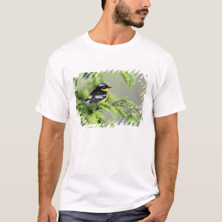 Male Magnolia Warbler, Dendroica magnolia T-Shirt