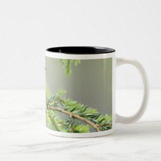 Male Magnolia Warbler, Dendroica magnolia Two-Tone Coffee Mug