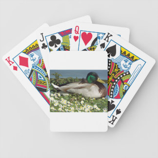 Male Mallard Duck Bicycle Playing Cards
