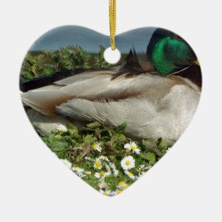 Male Mallard Duck Christmas Ornament