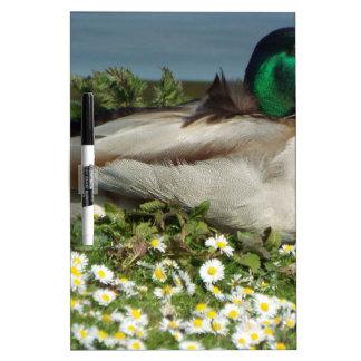 Male Mallard Duck Dry-Erase Whiteboard