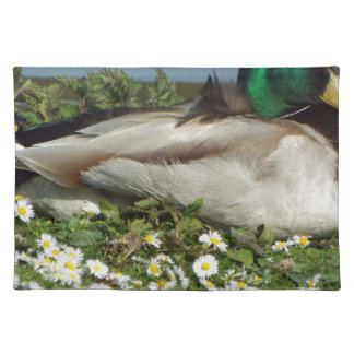 Male Mallard Duck Placemat