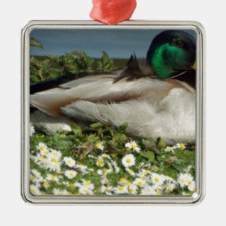 Male Mallard Duck Silver-Colored Square Decoration